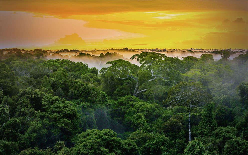 Estudo inédito avalia eficiência da cobertura florestal e estoque de carbono da Amazônia brasileira