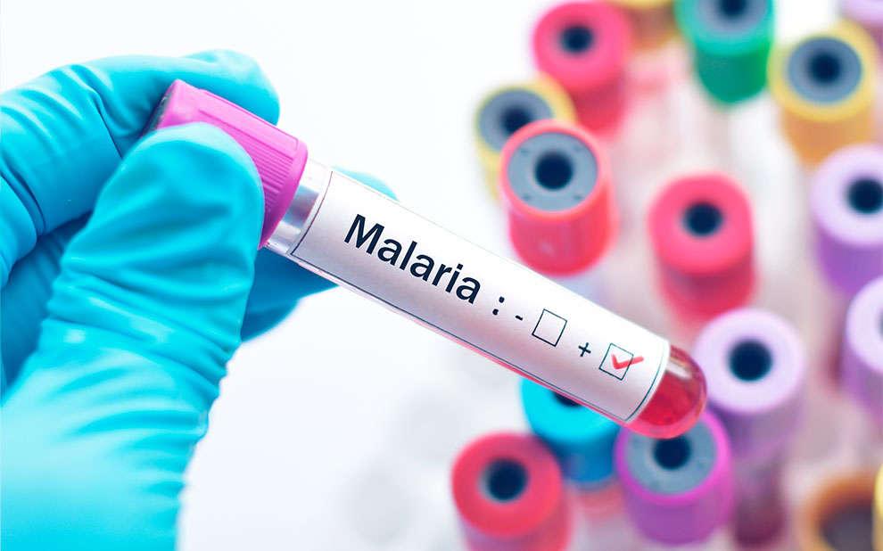 Pesquisa sobre modelagem epidemiológica da malária é premiada pela SBMAC